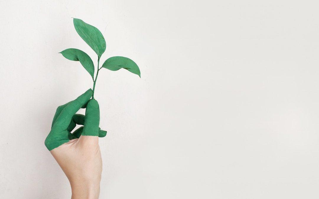 Top 10 Environmental Nonprofits